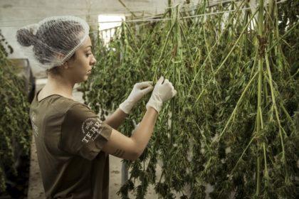 Gelungener Jahresstart: Neuer Lobbyverband und erster deutscher Cannabis-Fonds