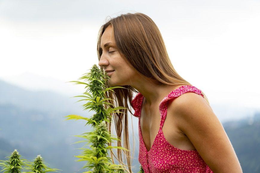 Start-up Cannovum plant Cannabis-Revolution in Deutschland