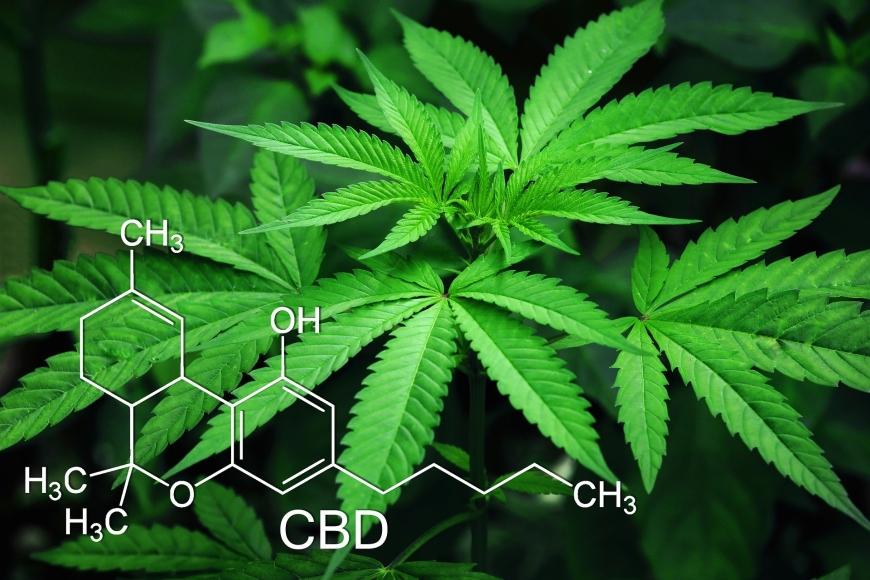 Studie lässt aufhorchen: Könnte Cannabis vor Corona schützen?