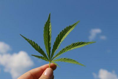 Cannabis-Prohibition: Berliner Anwalt verklagt Bundesregierung