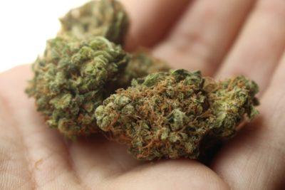 """US-Bundesstaaten: """"Cannabis ist essenziell"""""""